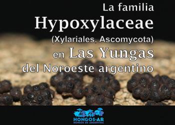 Teaser Hypoxylaceae